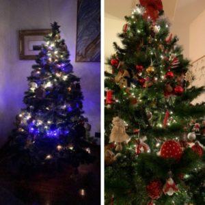 Il Natale alberi