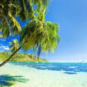 Giornata internazionale dei Tropici